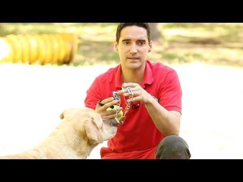 Tipos de collares - Adiestramiento canino - Sapeando