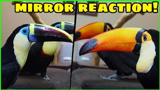 Are Toucans Smart Enough to be Self Aware? | The Mirror Test of Intelligence