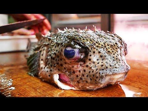 Japanese Street Food - PORCUPINE FISH Sashimi Japan