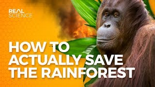 How to Actually Save the Rainforest