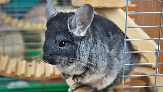 15 Cutest Exotic Animals You Can Own As Pets