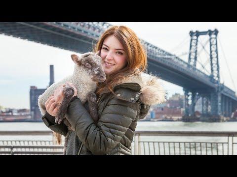 Cute Pet Lamb Lives In New York City Apartment