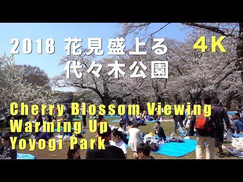 代々木公園の桜 お花見の買い出しはどこがいい?テイクアウトのおすすめは?