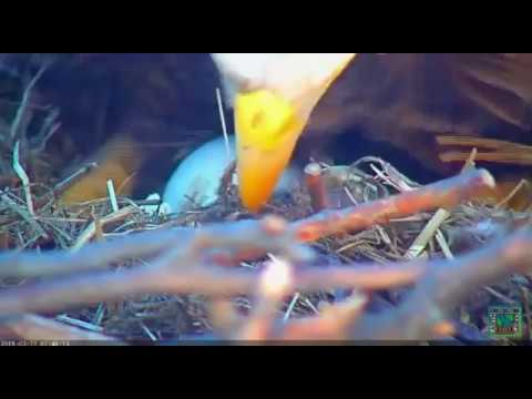 Eaglet hatches in D.C.