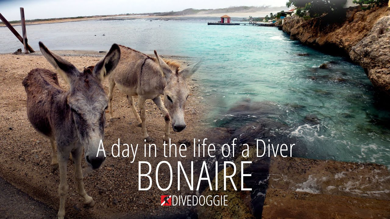 A Day in the Life of a Diver – Bonaire