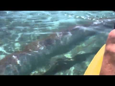 發現深海銀龍魚