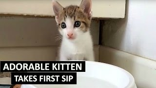 Kitten drinking water for the first time