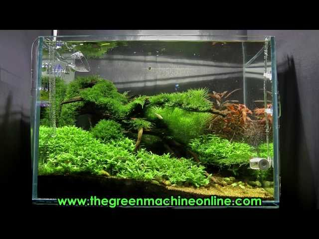 Riverbank Aquascape @ The Green Machine by James Findley