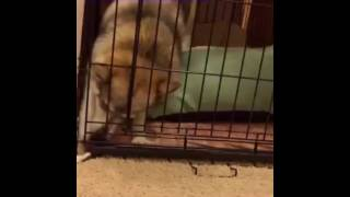 DOG LOSES TOY, GOES ABSOLUTELY INSANE