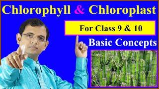 Chlorophyll & Chloroplast | For class 9 & 10
