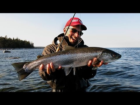 Fly Fishing Sea trout along the coast