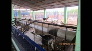 preview picture of video 'La Cabrita, Pescaderia Barahona. Republica Dominicana.'