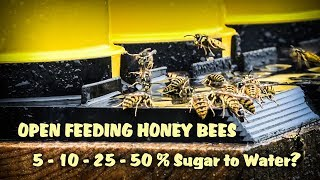 How Much Sugar Do Honey Bees Prefer In Their Water? Sugar Syrup Percentages TESTED Catching Wasps!