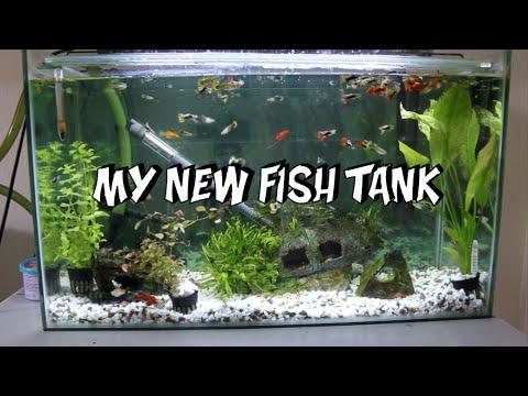 My New Fish Tank!