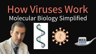 How Viruses Work - Molecular Biology Simplified (DNA, RNA, Protein Synthesis)