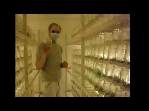 Parasites sa anyo ng mga bulate