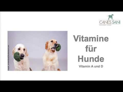 Vitamine für Hunde - Achtung, wenn Ihr Hund z.B. Herzmedikamente oder Mittel gegen Epilepsie erhält!