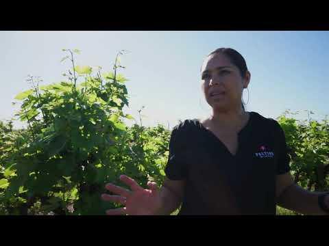 Peltier Winery X BioFiltro