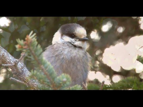 Beautiful Nature Video & Relaxing Music - Life (HD)