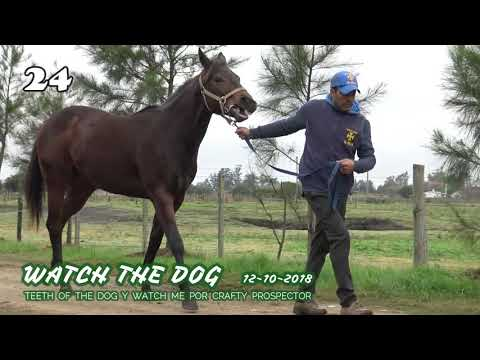 Lote WATCH THE DOG