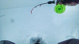 Отчеты о рыбалке на рыбинском водохранилище 2020 февраль