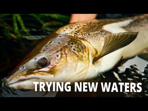 Tips og tricks til laksefiskeri i en ny å