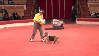 Смотреть онлайн Клоун с собачками выступает в цирке