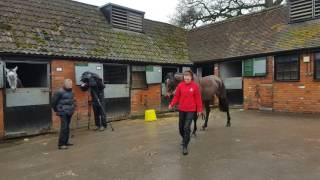 Le Prezien - (Blue Bresil) Gr.1 2nd, Gr.2 winning chaser owned by JP Macmanus, trained by Paul Nicholls