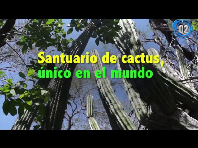 las-vacunas-en-el-santuario-de-los-cactus