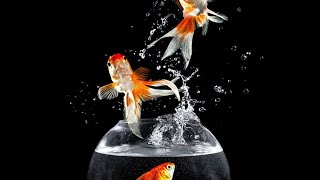 How to Save a Dying Goldfish??
