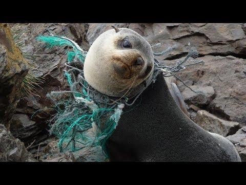 8 de junio dia mundial de los oceanos
