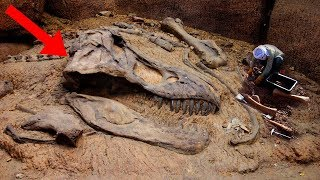 Most AMAZING Fossil Discoveries Ever!