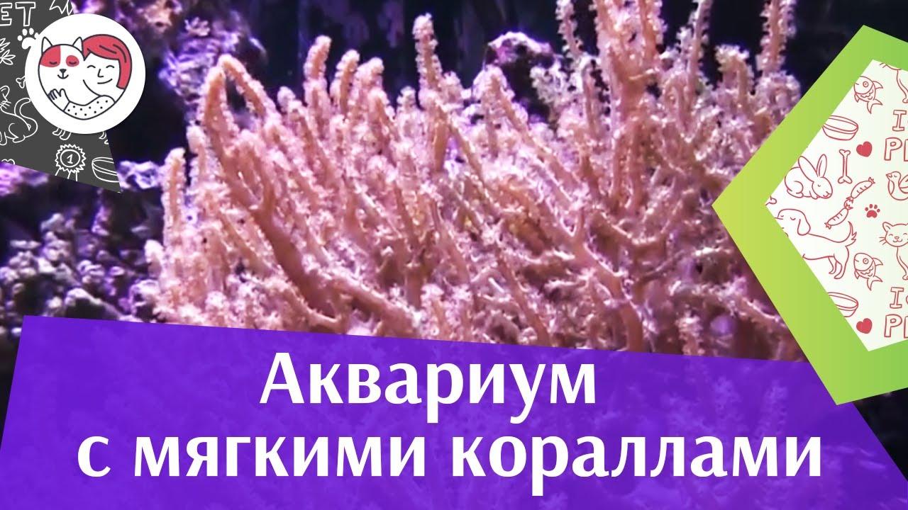 Аквариум с мягкими кораллами АкваЛого на ilikePet