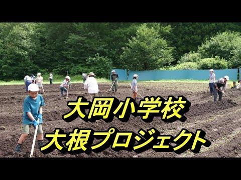 大岡小学校大根プロジェクト2019種まき