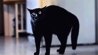 Scared cats compilation Part 1 - Video Youtube