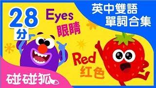 英中雙語 單詞合集兒歌合集 | Learn Chinese and English together | 碰碰狐PINKFONG | 兒童兒歌
