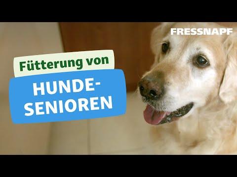 Fütterung Hundesenioren - Die richtige Ernährung