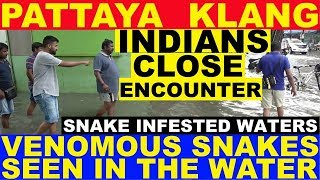 PATTAYA KLANG INDIAN GUYS CLOSE ENCOUNTERS WITH POISONOUS VENOMOUS SNAKES