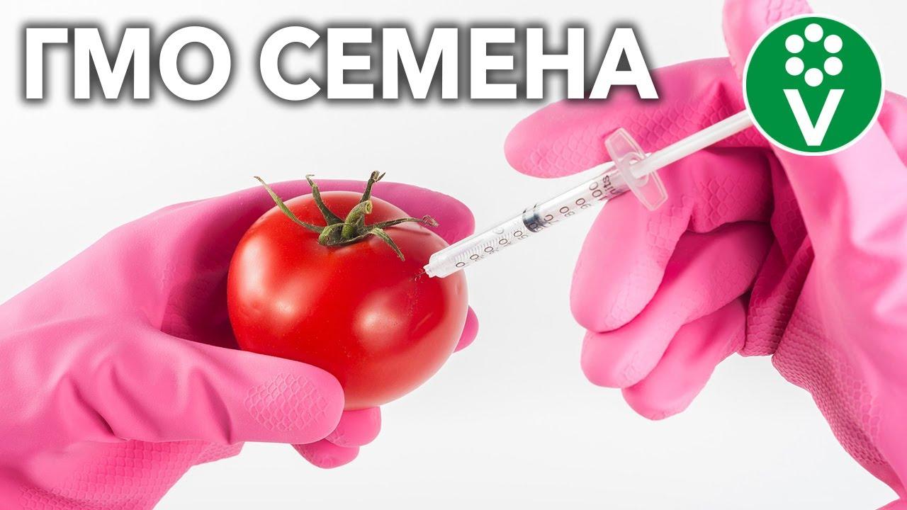 Чем отличаются ГМО семена от гибридов F1?