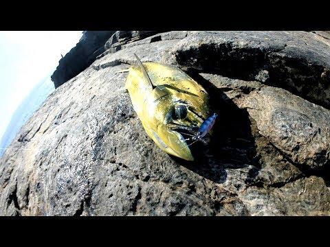 Cicada DUO Tetra Works TetraJig 4.6cm 10g PJA0101 Zebra Glow