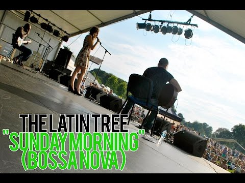 The Latin Tree Video