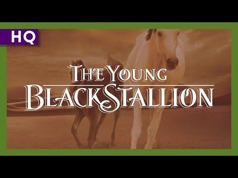 The Young Black Stallion ( Genç Siyah inci )