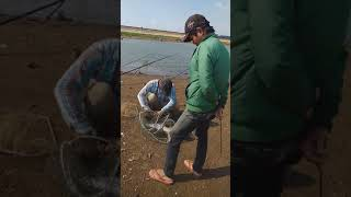 Câu Cá Thư Giản Hồ Ea Kao Bmt đăk Lăk. Cá Thác Lác 4kg