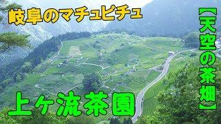 岐阜のマチュピチュ天空の茶畑が絶景過ぎる!