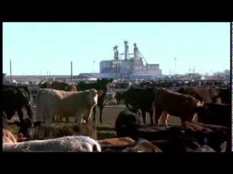 Animal Feed vs. Human Food: Challenges and Opportunities in Sustaining Animal Agriculture