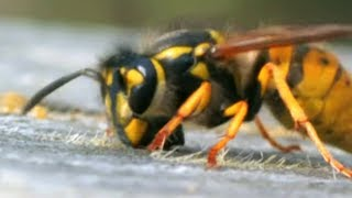 Facts About Bees 🐝 - Secret Nature | Bee Documentary | Natural History Channel
