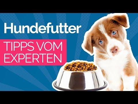 HUNDEFUTTER: Trockenfutter, Nassfutter oder Barf? Daran erkennst Du gutes Hundefutter (dog food)
