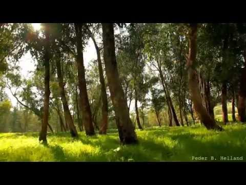 Beautiful Nature Video & Relaxing Music - Echoes of the Forest (HD)