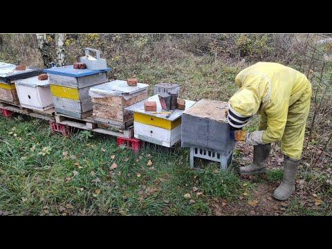 Пчеловодство. Защита ульев от грызунов. Чем утеплить тонкостенные ульи.Утепление ульев в зиму.