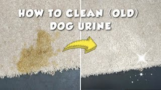 How To Clean Old Dog Urine Stain
